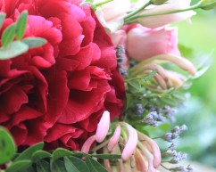 Beautiful peonies - every brides favourite wedding flower! Here with gorgeously scented honeysuckle